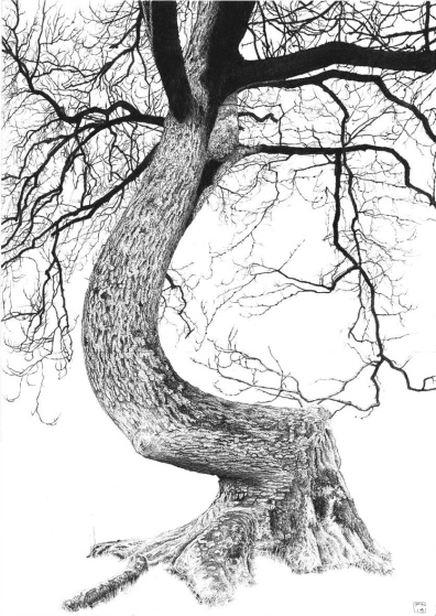 Ash/Tree/Nature/CranborneChase/TollardRoyal/Dorset/Bark/Poetry/Pencil/Drawing/Graphite