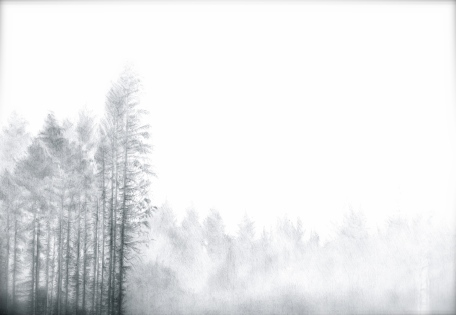 BelleverTor/Dartmoor/Devon/NPA/Mist/Trees/Plantation/Pine/Conifer/Drawing/Pencil/Graphite/Blackandwhite