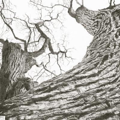 ash/lewesdonhill/dorset/bark/texture/tree/wood/pencil/drawing/graphite