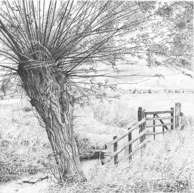 Willow/Tree/Somerset/Levels/Nature/Drawing/Pencil/Graphite/Tree/Bark